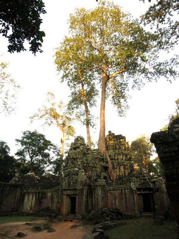 Рис. 39. Храм Та Пром во власти деревьев, фото 2013 г.