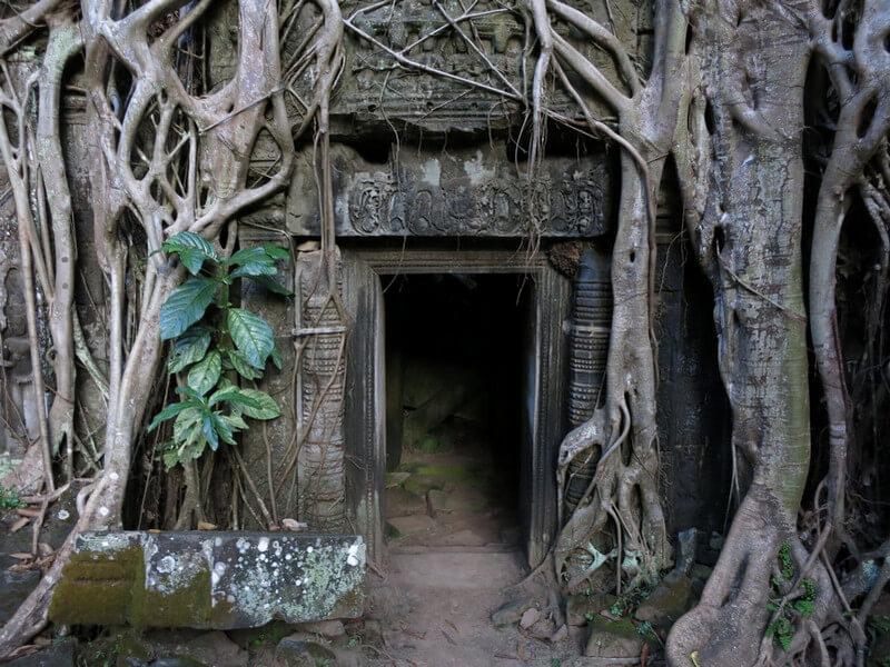 Рис. 40. Деревья и храмовые постройки образуют единое целое, фото 2013 г.