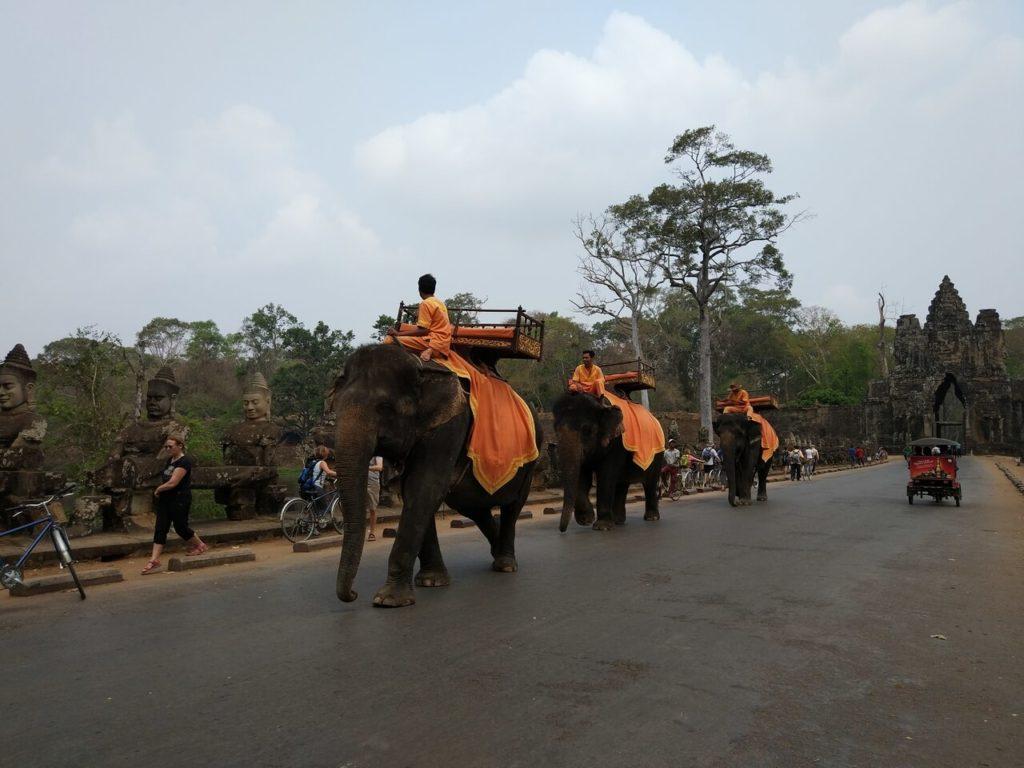 Слоны в Ангкоре